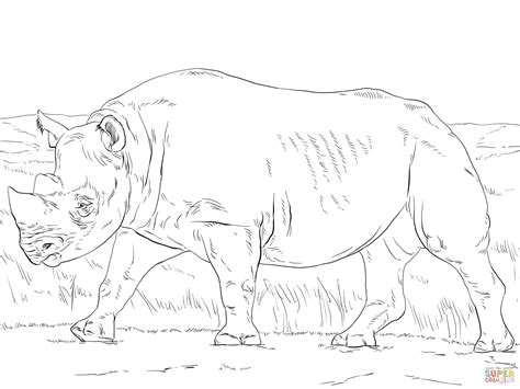 black rhinoceros coloring page free printable coloring pages