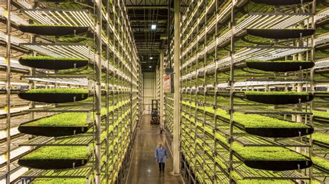turn africas cities  vertical farms opinion mg