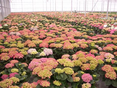 web co dei fiori florpagano di antonio pagano co mercato dei fiori