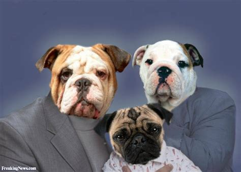 family dogs family pictures freaking news