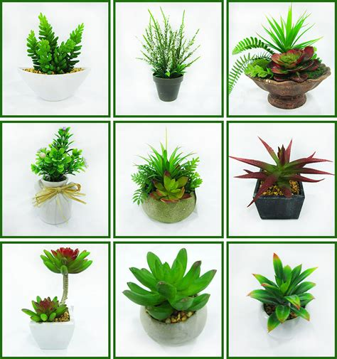 indoor small plants wholesale small indoor colored succulent cactus plants