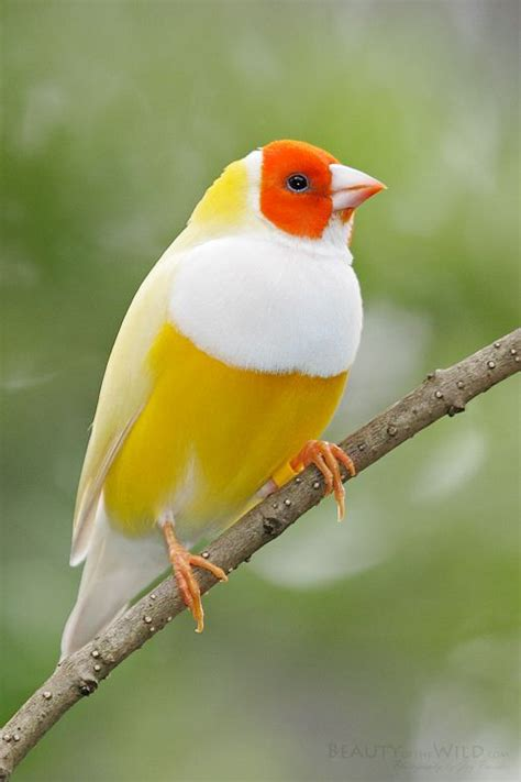 Numerology Colors by The Meaning And Symbolism Of The Word 171 Bird 187