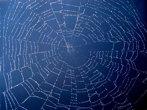 pattern free web spiders web free stock photo public domain pictures