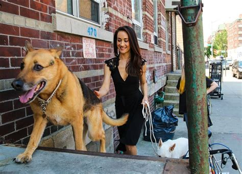 q dogs maggie q and wildaid say no to ivory and rhino horn look to the