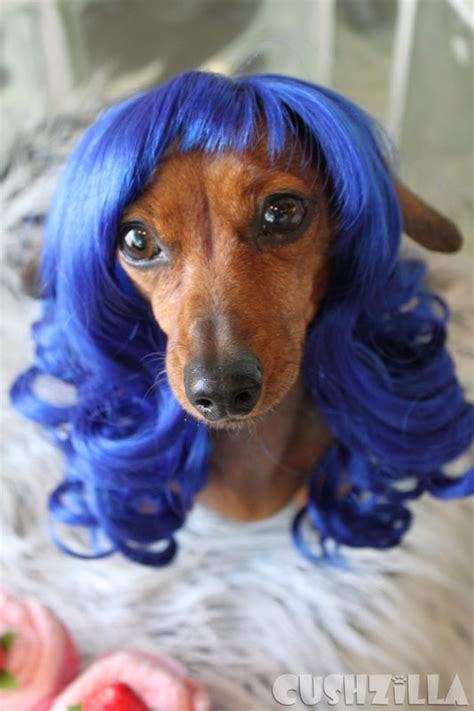 katy perry puppy cats and dogs that totally look like someone from cushzilla
