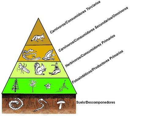 cadenas redes y piramides troficas wikipedia 191 qu 233 es una red tr 243 fica y una cadena alimenticia lifeder