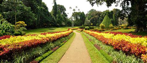 Peradeniya Botanical Garden Peradeniya Botanical Garden Sri Lanka