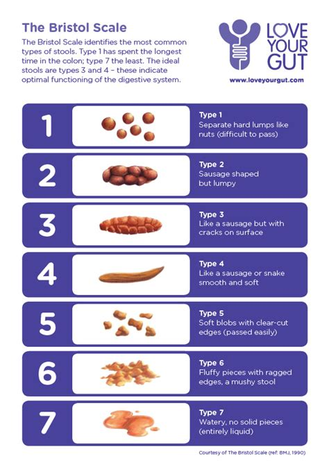 Stool Consistency Scale by Check It Out Your Gut