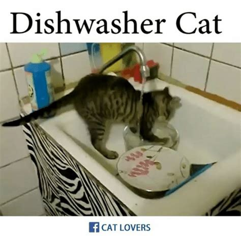 Cat Lover Meme - dishwasher cat cat lovers meme on sizzle