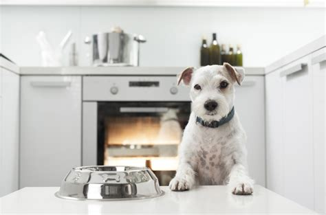 are dogs bad for you top 10 foods that are bad for dogs dogzone nyc