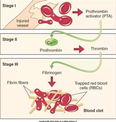mechanism of blood clotting flowchart how does calcium assist in blood clotting quora