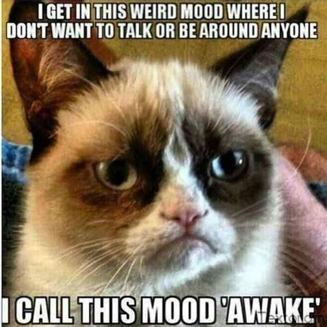 Grumpy Cat Coma Meme - 17 best images about grumy cat on pinterest always