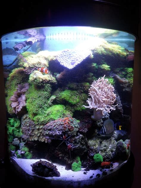 aquarium design network huntington station ny custom aquariums huntington aquarium maintenance