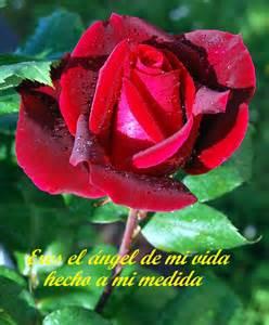 frases de con imagenes de rosas imagenes bonitas de rosas para las madres hermosas