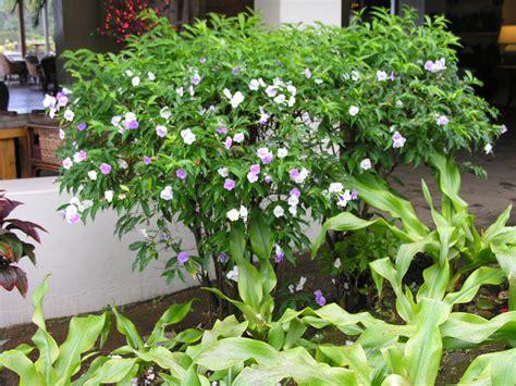 icangardencom gardening resource site