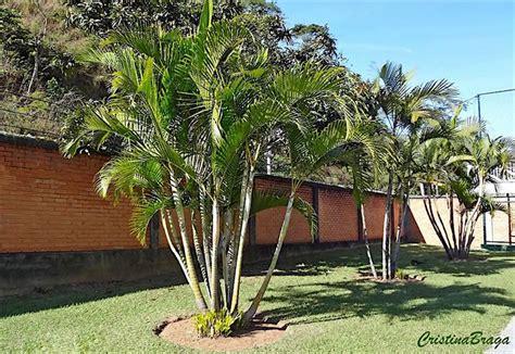 15 Benih Bunga Palmeira Areca Bambu 130 melhores imagens de inspira 231 227 o paisagismo no jardim interior plantas de