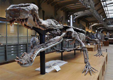 Sarcosuchus imperator - Wikipedia Giant Alligator Dinosaur