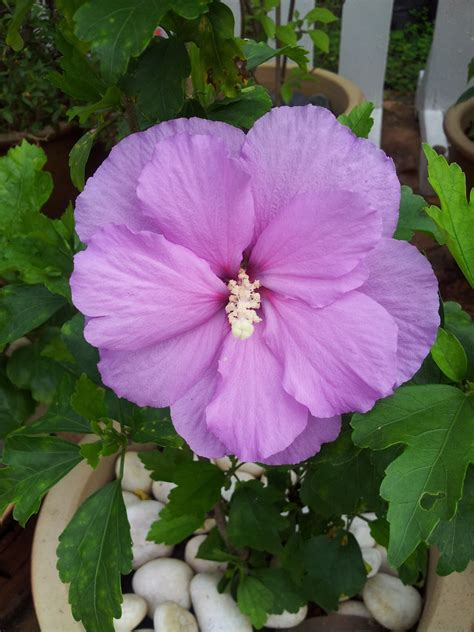 na lovely kitchen bunga raya purple lapis