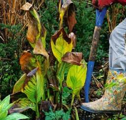 Biggest Online Plants Store by What To Do This Week Lift Cannas Daily Mail Online