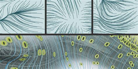 pattern formation algae soma architecture pattern formation