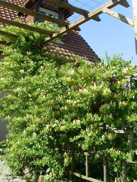 Plante Balcon Nord by Fleurir Balcon Ou Sa Terrasse Selon Exposition