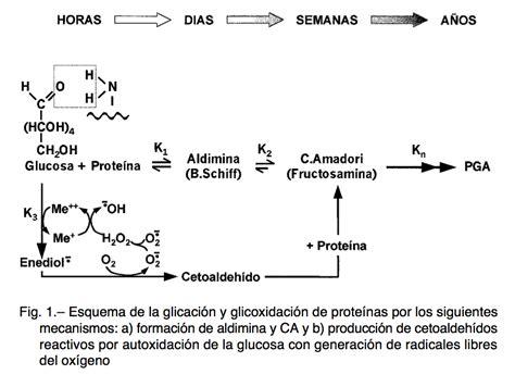 la formacion medieval de reacci 243 n de maillard glicaci 243 n de prote 237 nas centrobioenergetica