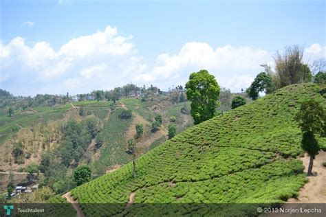 pic of grt pic of home town illam photography norjen lepcha