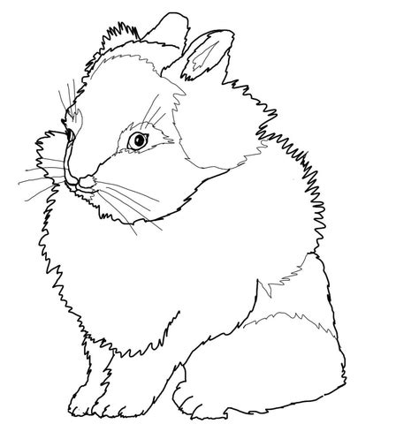 lionhead rabbit coloring page  printable coloring pages