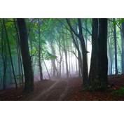 Mist Nature Landscape Path Forest Morning Leaves