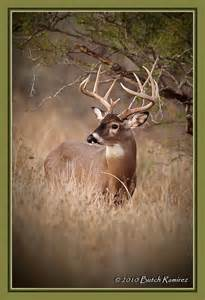 bucks cing and fishing 1949 best whitetail deer images on board