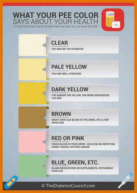 pregnancy urine color 3 4 uti urine color leterformat