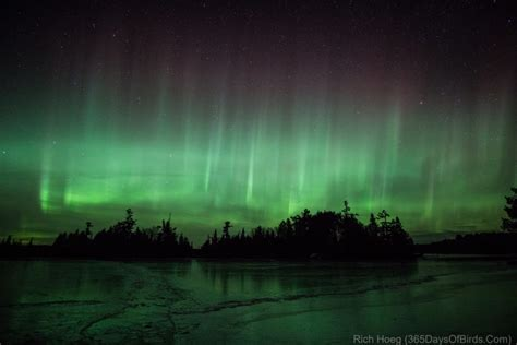 northern lights duluth mn 365 days of birds duluth minnesota based birder