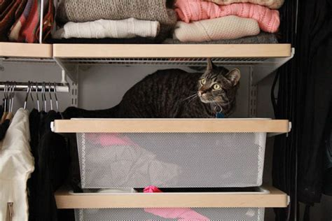 sock drawer relax my cat sustainable apartment renovation before and after the