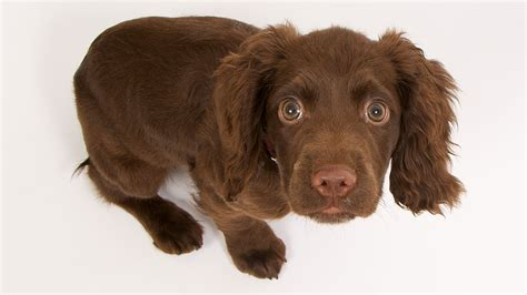puppy has separation anxiety home alone alleviating your s stress when you are away american kennel club