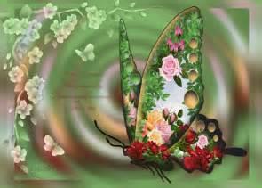 bello fondo de mariposas con una mensaje de reflexin para imagen bonita de mariposa