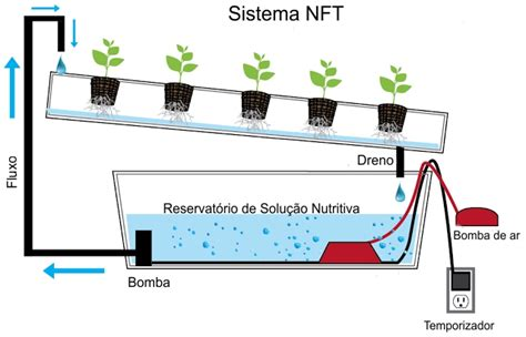 biaya membuat na como plantar alface em hidroponia