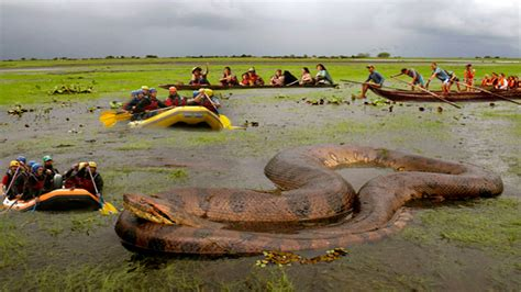 The Found snake in river www pixshark images galleries