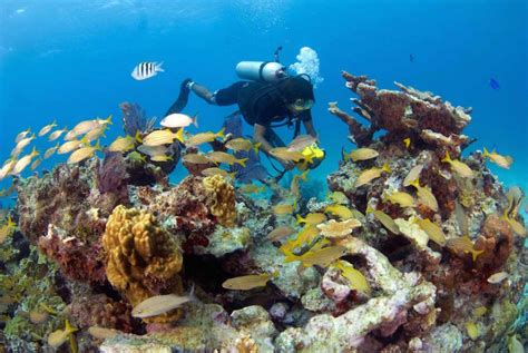 best dive locations scuba diving in the best locations of mexico