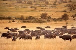 New Bathroom Cost Masai Mara Safari 1 Masai Mara Kenya Travel Tips