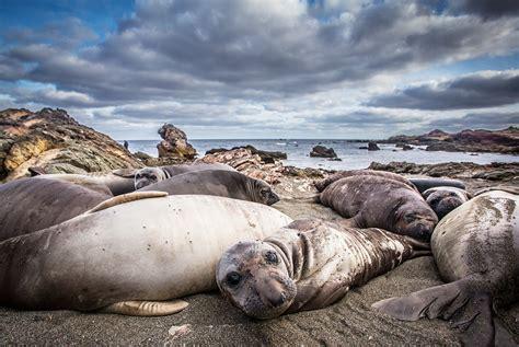eleven seal species narrowly escape extinction