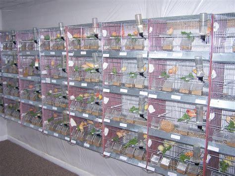 Lu Uvb Untuk Reptil pengaruh cahaya terhadap jenis kenari klub burung
