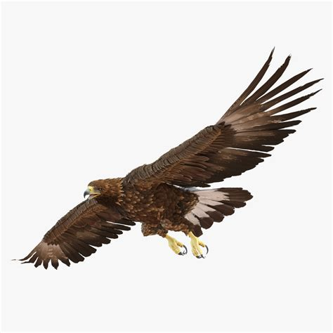 Kaos 3d Eagle Fly 3d golden eagle pose 7 model