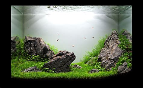 Iwagumi Aquascape by Hungarian Aquascaping Contest 2010 The Winners Uk