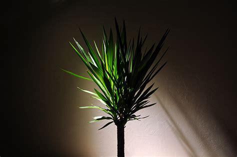 plants that grow in dark rooms plantas para ambientes internos e sombras verdy vasos