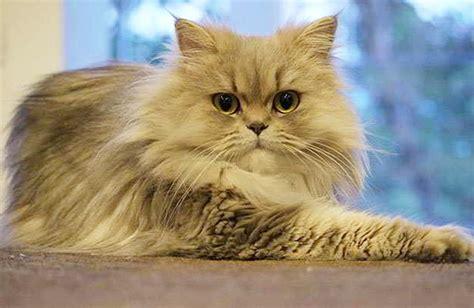 Hair Dryer Kucing 15 anak kucing paling lucu dan menggemaskan tips pelihara