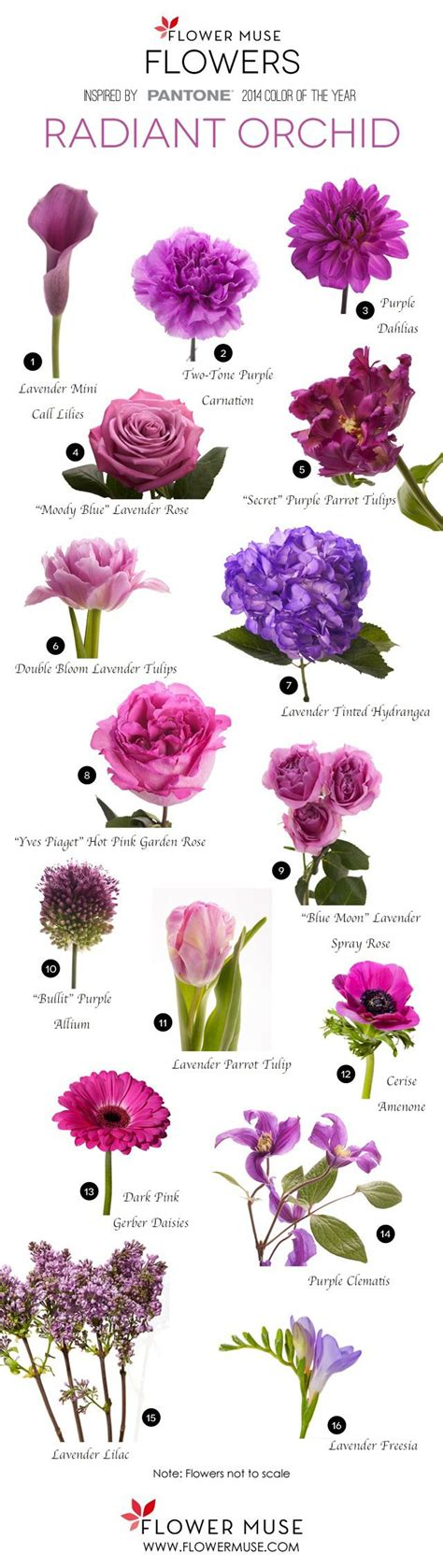 names of purple 1000 ideas about purple flower names on pinterest