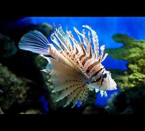 cool looking cool looking fish flickr photo sharing