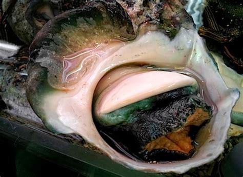 come si cucinano le lumache di mare yakogai le costose lumache giganti specialit 224 di okinawa