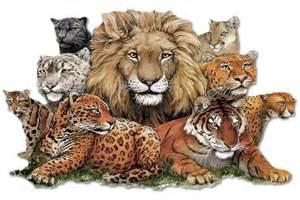Tiger Cheetah Leopard Jaguar Panther Felines Leopard Cheetah Tiger Big Cats