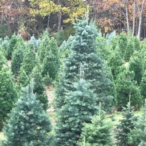 best 28 hudson valley christmas tree cut your own